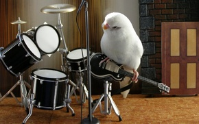 Picture music, white, animals, bird, parrot, band, nice