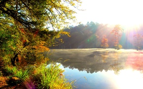 Wallpaper forest, the sun, rays, nature, river, morning, haze, Bank