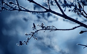 Picture branch, snow, cold, nature, frost, frost, winter, sprig