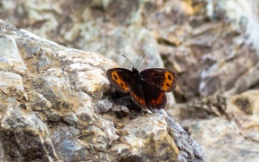 Picture Nature, Rocks, Butterfly, Insect