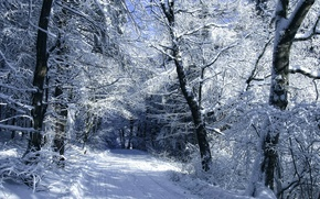 Picture cold, winter, road, morning, day, the road in the snow