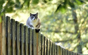 Picture cat, look, the fence