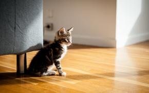 Wallpaper cat, comfort, house