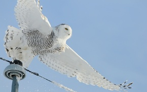 Wallpaper wire, power lines, snow, bird, owl, white