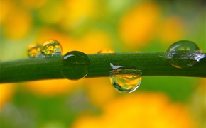 Picture water, drops, background, blur, stem