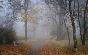 Picture autumn, fog, Park, alley, benches