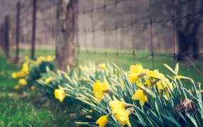 Picture greens, flower, grass, leaves, flowers, yellow, background, mesh, widescreen, Wallpaper, the fence, fence, the fence, …