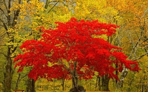Picture leaves, nature, tree, Forest