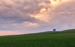 Picture field, the sky, tree