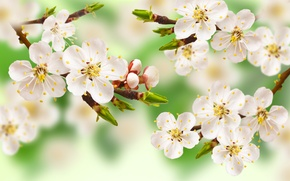 Picture flowers, Apple, branch, tree, spring, leaves