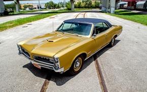 Picture Coupe, Pontiac, GTO, 1966, Pontiac, Tempest, tempest