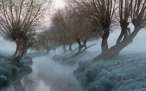 Picture trees, fog, river