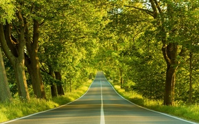 Picture Road, Spring, Trees