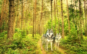 Picture forest, style, texture, wolves