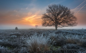 Picture frost, grass, tree, spring, morning, frost, Netherlands, March, the province of North Brabant
