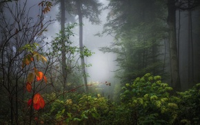 Picture autumn, forest, leaves, fog