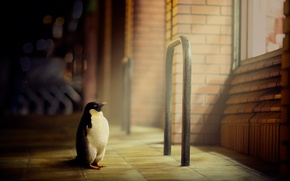 Picture the city, street, penguin