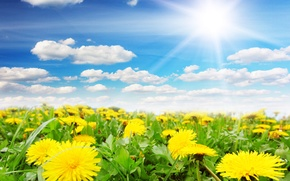 Picture the sky, the sun, spring, dandelions