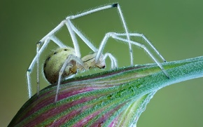 Picture drops, transparent, legs, spider, hairs, Bud
