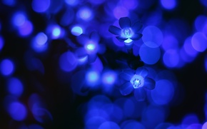Picture flowers, glow, Blue, lights