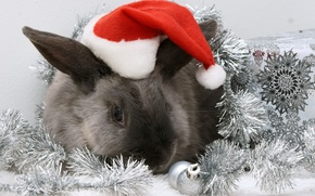 Picture hat, rabbit, New year