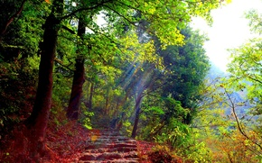 Picture FOREST, GREENS, TRAIL, LIGHT, RAYS, STAGE