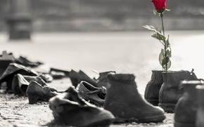 Picture flower, rose, shoes