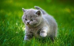 Picture grass, walk, kitty