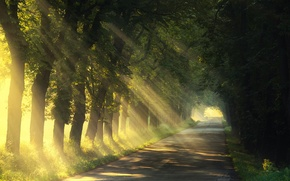 Picture road, summer, light, trees, nature