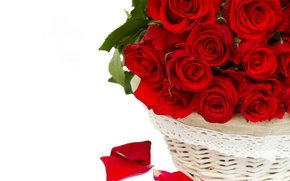 Picture flowers, roses, red roses