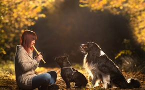 Picture dogs, girl, the flute