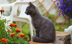Picture cat, cat, flowers, blur, stump, chair, smoky, marigolds