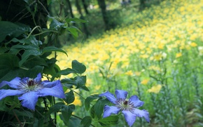Picture forest, summer, flowers, nature, glade