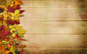 Picture autumn, leaves, flowers, berries, background, tree, vintage, background, autumn, leaves
