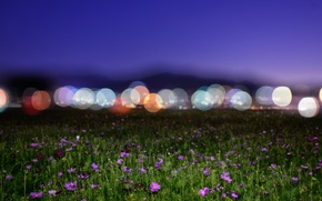 Picture field, flowers, night, lights, bokeh