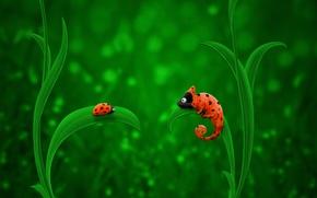 Picture Orange, Chameleon, Green, Ladybug