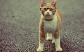 Picture cat, animal, red, glasses, collar