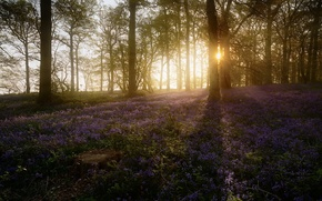 Picture forest, spring, morning