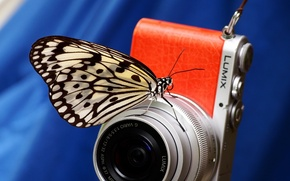 Picture macro, background, butterfly, camera