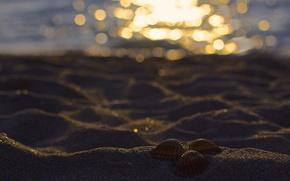 Picture sand, beach, glare, three, shell, bokeh
