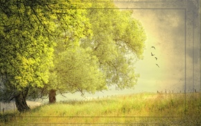 Picture summer, trees, nature, style, background