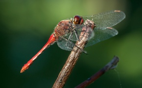 Picture flowers, macro, bokeh, dragonfly, wasp, leaf, worm