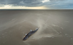 Picture sea, shore, fish
