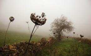 Wallpaper grass, fog, tree, the fence