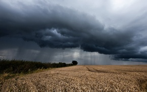Picture field, landscape, rain, ears