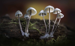 Picture wood, autumn, fungi, bonnets