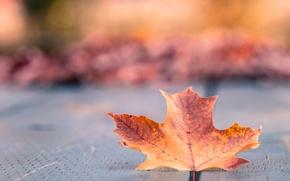 Picture autumn, macro, orange, yellow, Sheet, bokeh, maple
