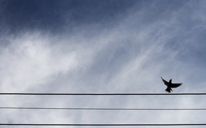 Picture the sky, bird, wire