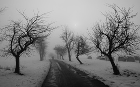 Picture winter, road, trees
