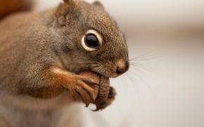 Picture blur, protein, muzzle, acorn